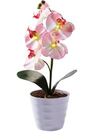 Orchidée LED en pot, bpc living, rose