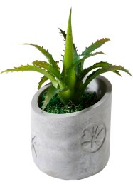 Succulente artificielle en pot en ciment, bpc living