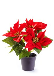 Poinsettia artificiel, bpc living bonprix collection